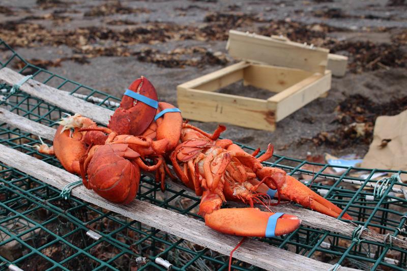 Achtung: Lobster mit Folgen