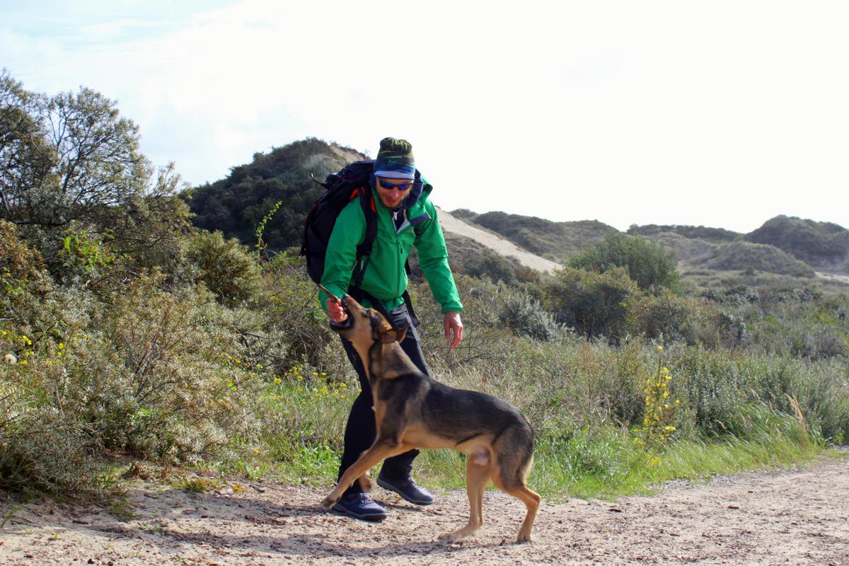 Wandern über belgische Sanddünen