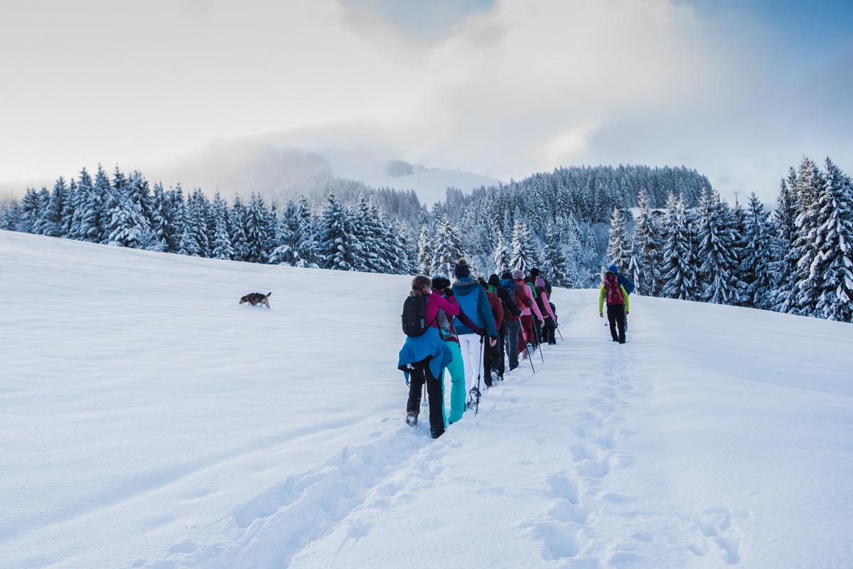 Kitzbühler Alpen – Erkunden mit Hund und Ski