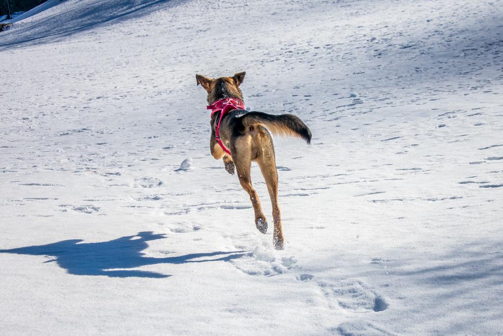 Mit dem Hund durch den Winter
